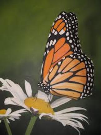 monarchdaisy
