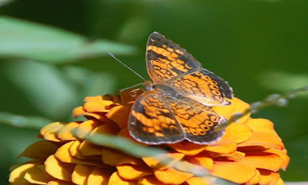 butterfly20130302