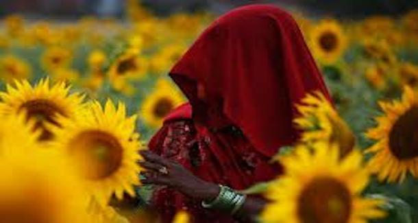 sunflower20130302