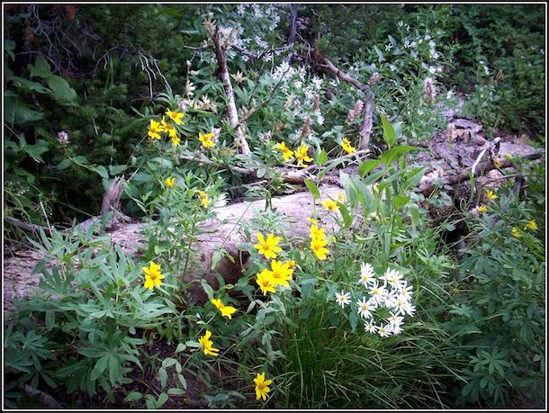 wildflowerlog