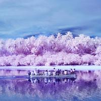 Infrared Photography Captures the Neon World of Colorblind Islanders - Creators